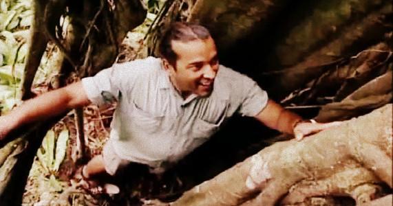 The JungleWallah Tropical Rainforest – 3