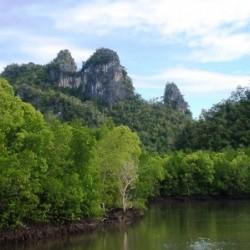 Kilim Mangrove