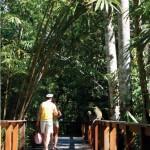 rainforest dweling
